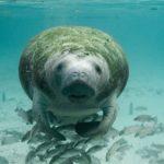Haven kan vara återställda inom 30 år enligt forskare