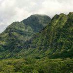 Två hotade havsfåglar har återupptäckts på Oahu